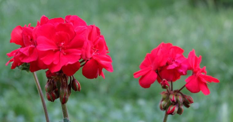Voir, apercevoir et regarder : «Voir une fleur et la regarder, voilà toute la difference!»