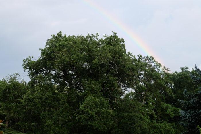 «Si un arc-en-ciel dure un quart d'heure, on ne le regarde plus.» Goethe